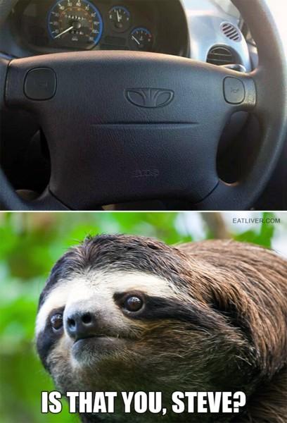 Name:  slothface.jpg Views: 235 Size:  68.3 KB