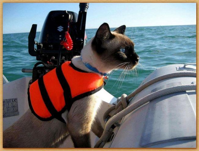 Name:  seacat.JPG Views: 404 Size:  59.5 KB