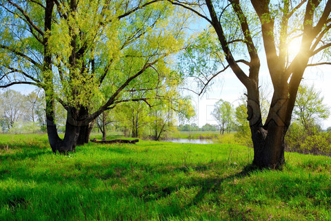 Name:  2272016-269999-green-spring-tree-and-sun.jpg