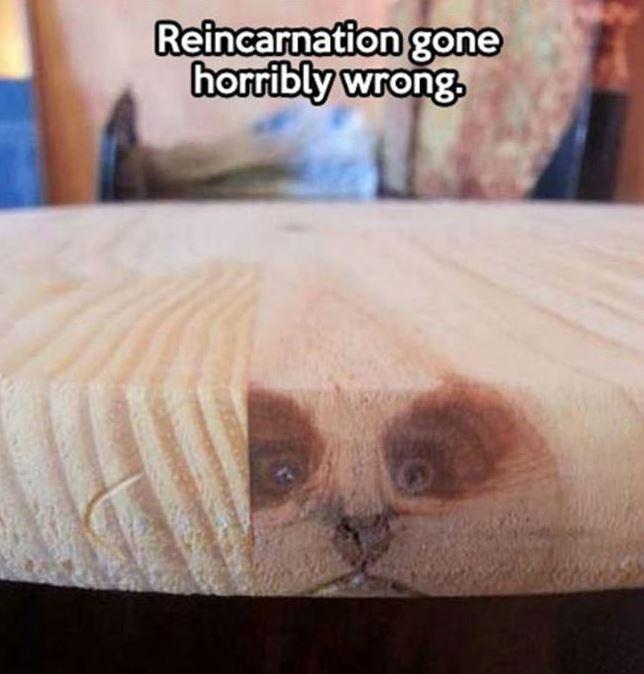 Name:  reincarnetion.JPG Views: 160 Size:  52.5 KB