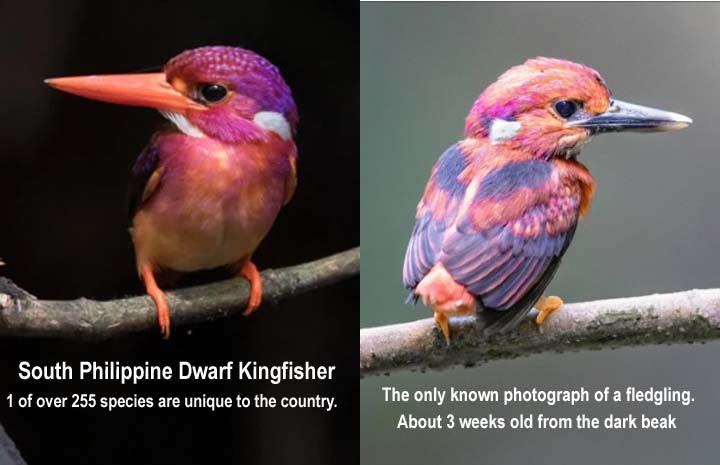 Name:  kingfisher.jpg Views: 50 Size:  44.0 KB