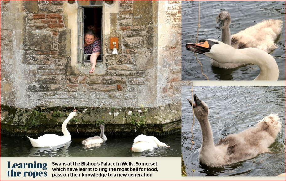Name:  Bath and Wells.JPG Views: 165 Size:  153.0 KB