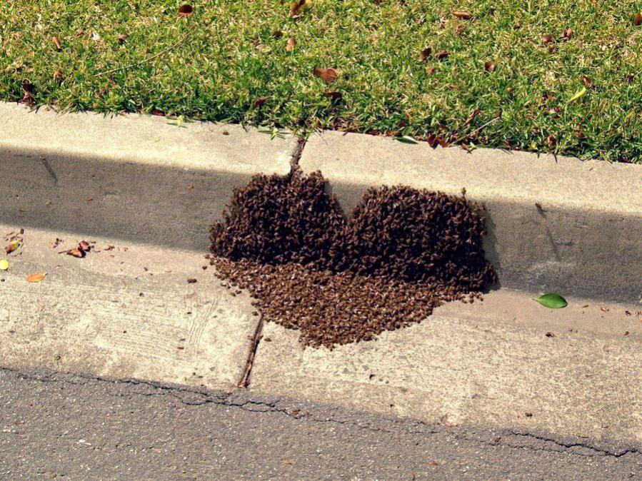 Name:  beeheart.jpg Views: 205 Size:  174.6 KB