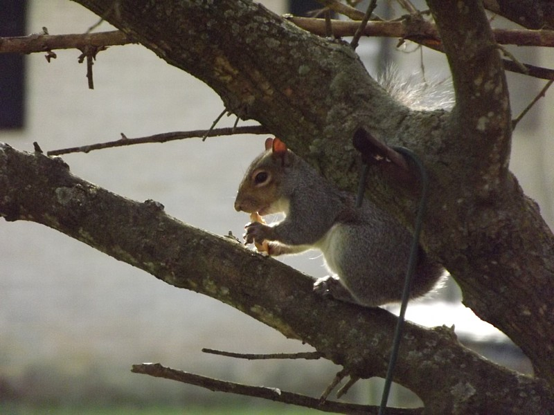Name:  coco the nutty squirrel 2.jpg Views: 145 Size:  135.1 KB