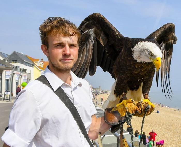 Name:  Bald Eagle.jpg Views: 136 Size:  143.7 KB