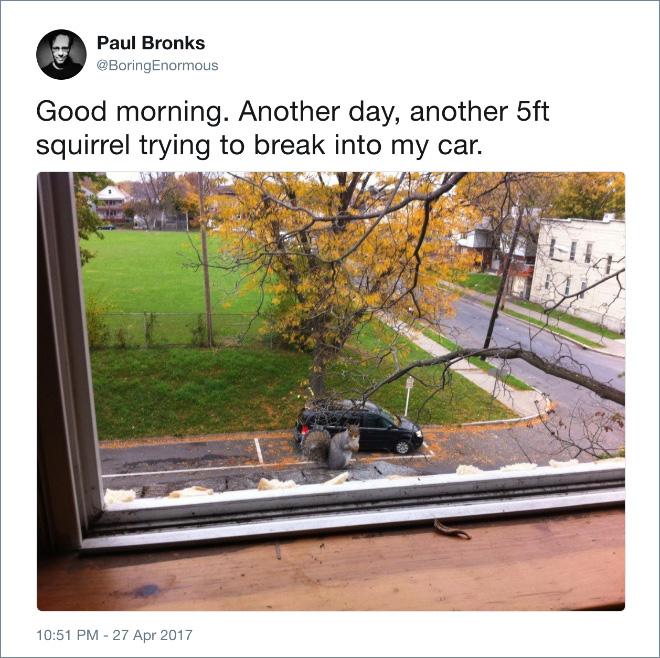 Name:  5 foot squrl.jpg Views: 71 Size:  168.2 KB