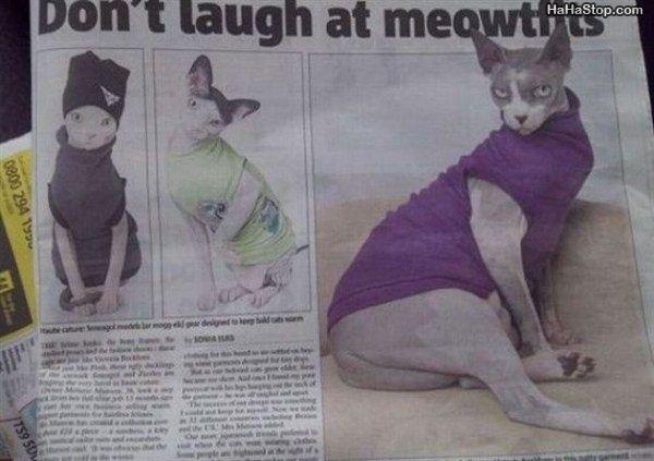 Name:  Dont_Laugh_Meow.jpg Views: 357 Size:  42.1 KB