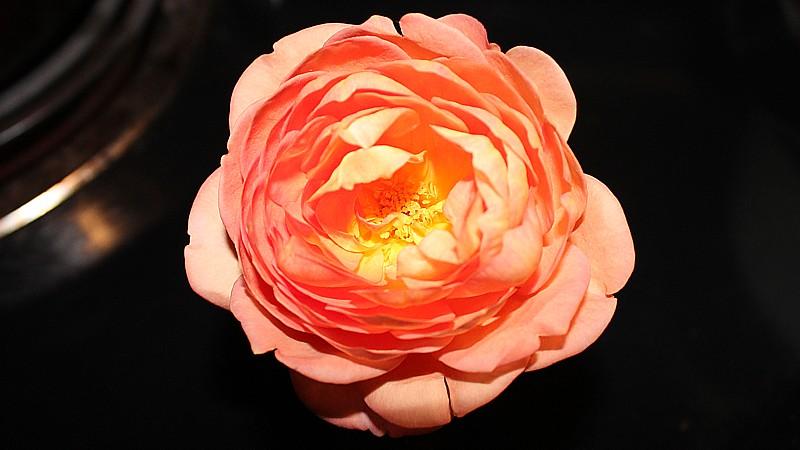 Name:  flower1.jpg Views: 99 Size:  86.0 KB