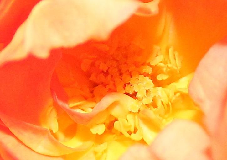 Name:  flower2.jpg Views: 97 Size:  81.2 KB