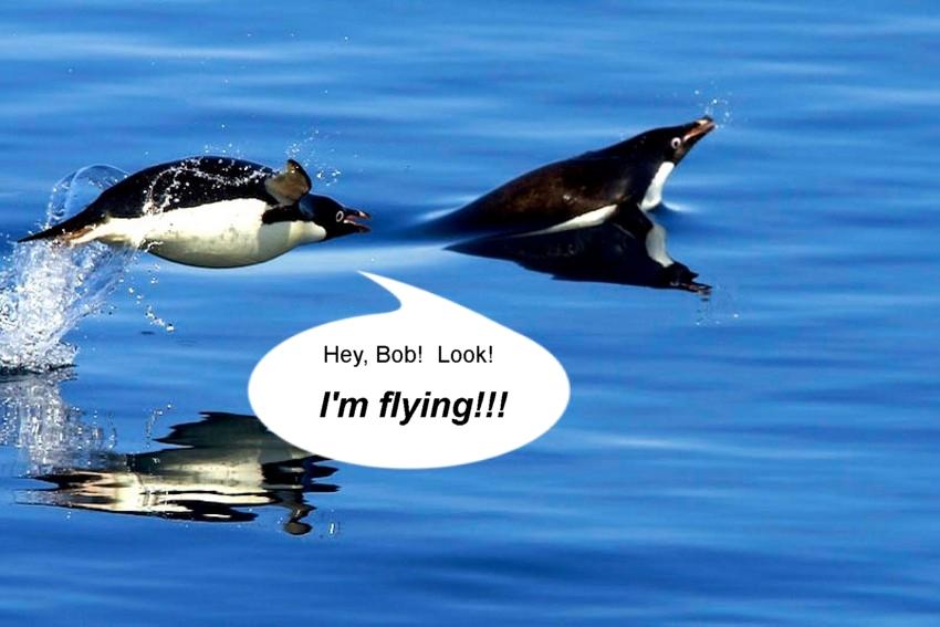 Name:  swimmingpenguins.jpg Views: 150 Size:  213.1 KB