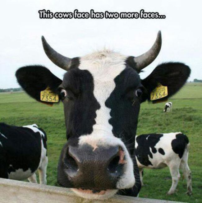 Name:  3 faced cow.jpg Views: 51 Size:  53.9 KB