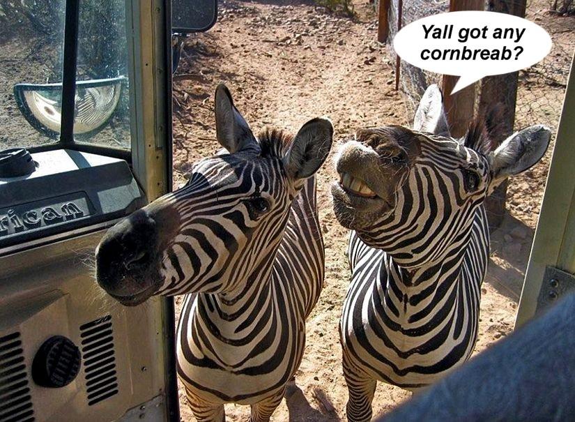 Name:  zebrabus.jpg Views: 84 Size:  193.9 KB