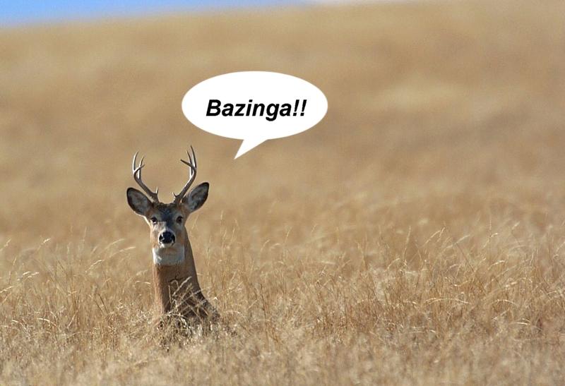 Name:  Bazinga.jpg Views: 49 Size:  301.2 KB