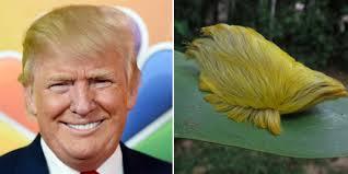 Name:  Donald.jpg Views: 86 Size:  6.7 KB