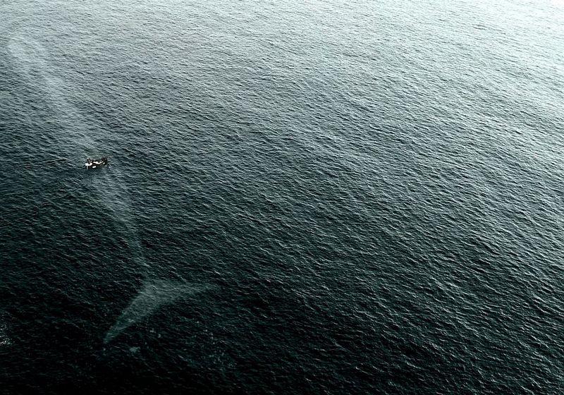 Name:  gonnaneedabiggerboat.jpg Views: 285 Size:  155.2 KB