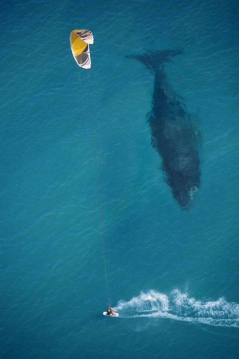 Name:  kite-surfing-with-whale-below-aerial-shot-from-above.jpg Views: 246 Size:  48.8 KB
