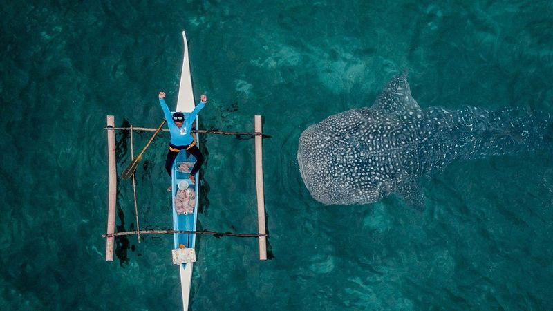 Name:  whaleshark.jpg Views: 160 Size:  61.2 KB