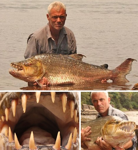 Name:  tigerfish_12.jpg