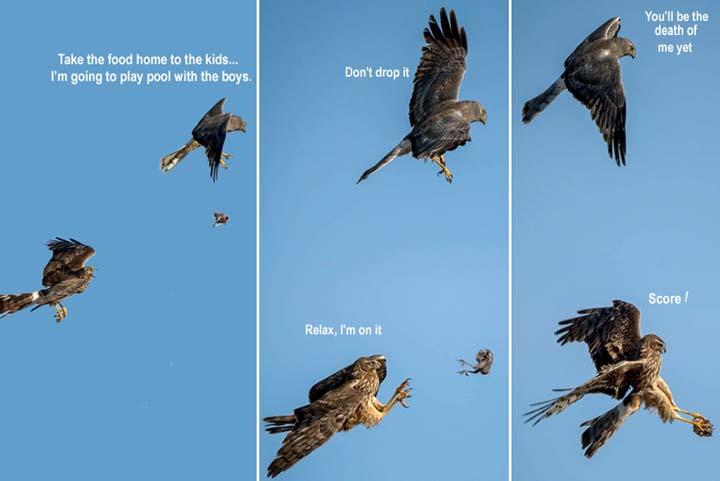 Name:  birdpass.jpg Views: 79 Size:  29.9 KB