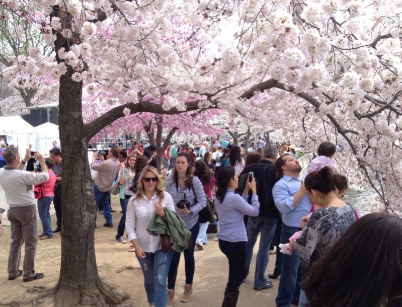 Name:  cherry crowd.jpg Views: 395 Size:  108.5 KB