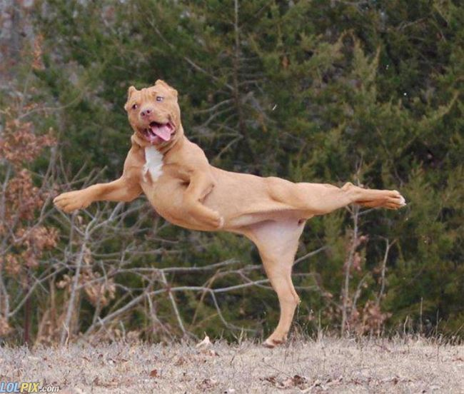 Name:  Fabulous_Dog.jpg Views: 194 Size:  66.2 KB