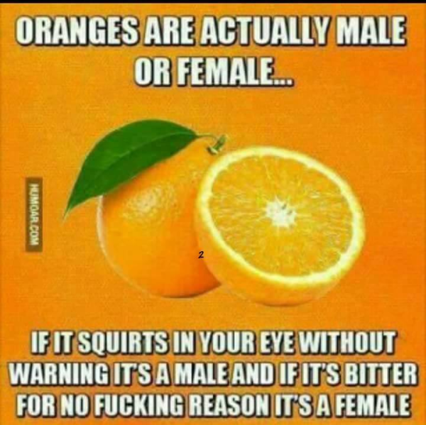 Name:  Sex-of-oranges.png Views: 161 Size:  429.0 KB