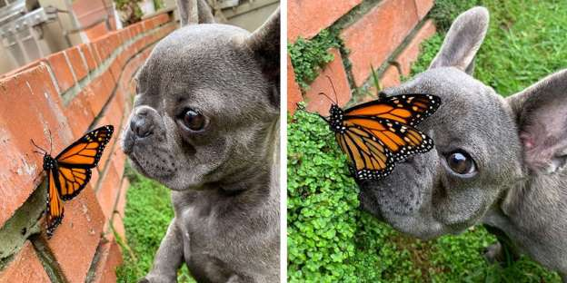 Name:  Dog and Butterfly.jpg