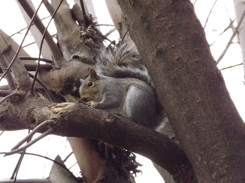 Name:  coco the nutty squirrel 1.jpg Views: 169 Size:  171.9 KB
