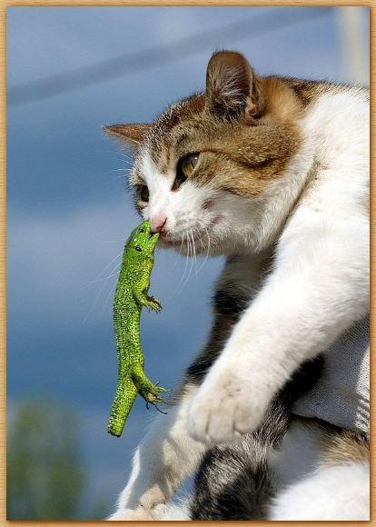 Name:  lizardcat.JPG Views: 356 Size:  42.0 KB