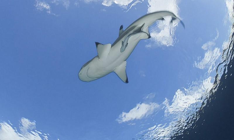 Name:  sharkfrombelow.jpg Views: 586 Size:  63.9 KB