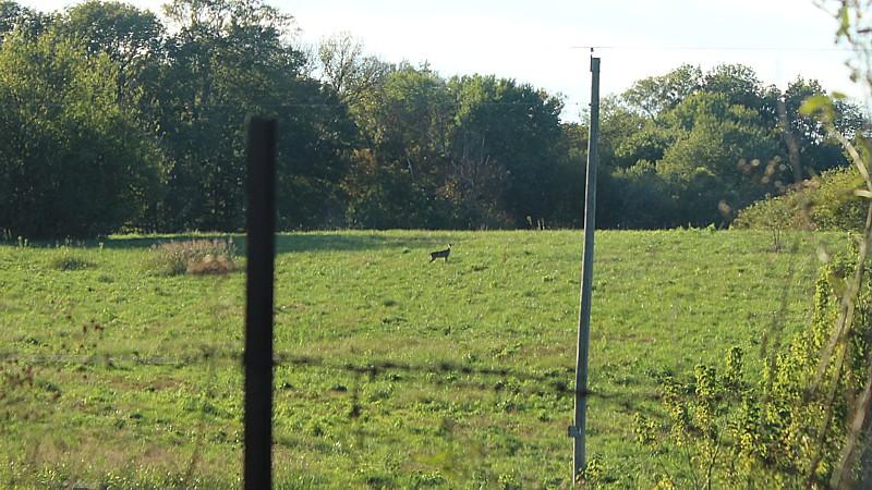 Name:  deer1.jpg Views: 600 Size:  164.0 KB