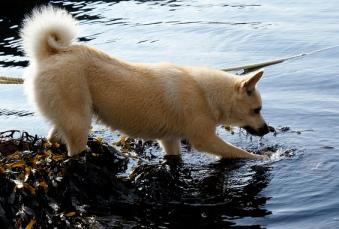 Name:  dog.jpg Views: 47 Size:  48.3 KB