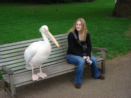 Name:  Pelican bench.jpg Views: 545 Size:  49.3 KB