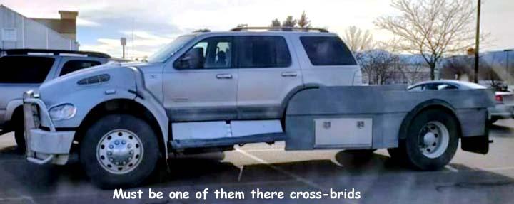 Name:  cross-brid.jpg Views: 98 Size:  31.7 KB