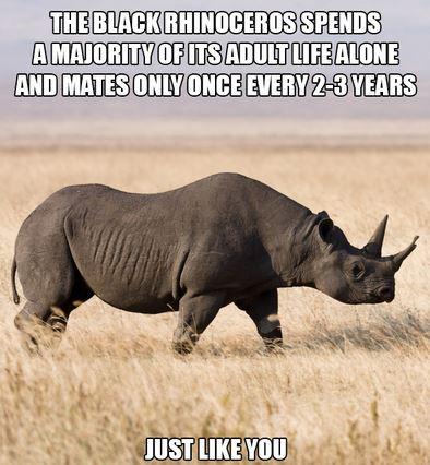 Name:  rhino.JPG Views: 234 Size:  45.8 KB