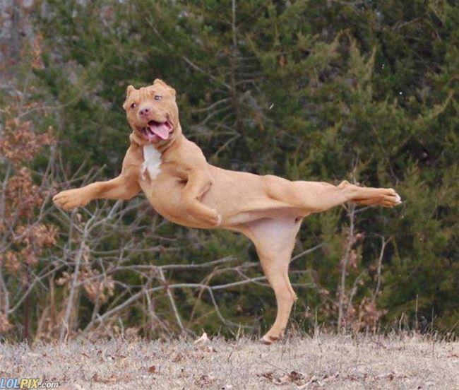 Name:  Fabulous_Dog.jpg Views: 313 Size:  66.2 KB