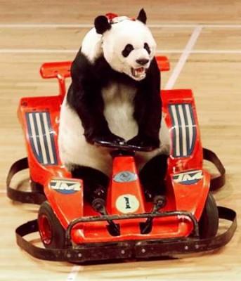 Weightlifting Panda The Cellar