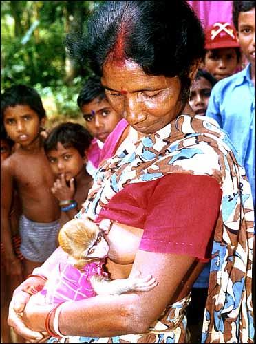 https://cellar.org/2002/breastfeedingmonkey.jpg
